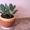 Комнатные растения,  горшки для комнатных растений #731408