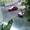 Продам 3-х ком. кв. на Чернышевского и 2-й Садовой - Изображение #7, Объявление #1272502