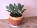 Комнатные растения,  горшки для комнатных растений