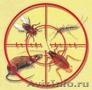 Уничтожение насекомых и дезинфекция помещений