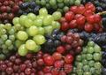 продаю черенки и саженцы винограда