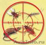 Комаров и грызунов нет