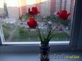 Продаю тюльпаны, луковицы - Изображение #2, Объявление #1271986