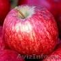 Карликовые саженцы плодовых культур