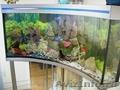 Профессиональное обслуживание аквариумов. Установка.